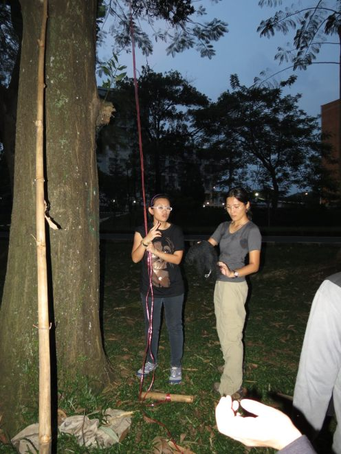 Susan and I set up the mistnets before heavy rain cancelled our bat waiting night