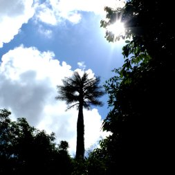 Palm tree silhouette/outline image make it like in the Jurassic Park movie