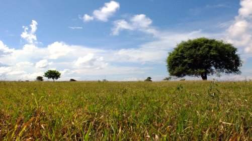 This Savanna is unrealisticly beautiful!